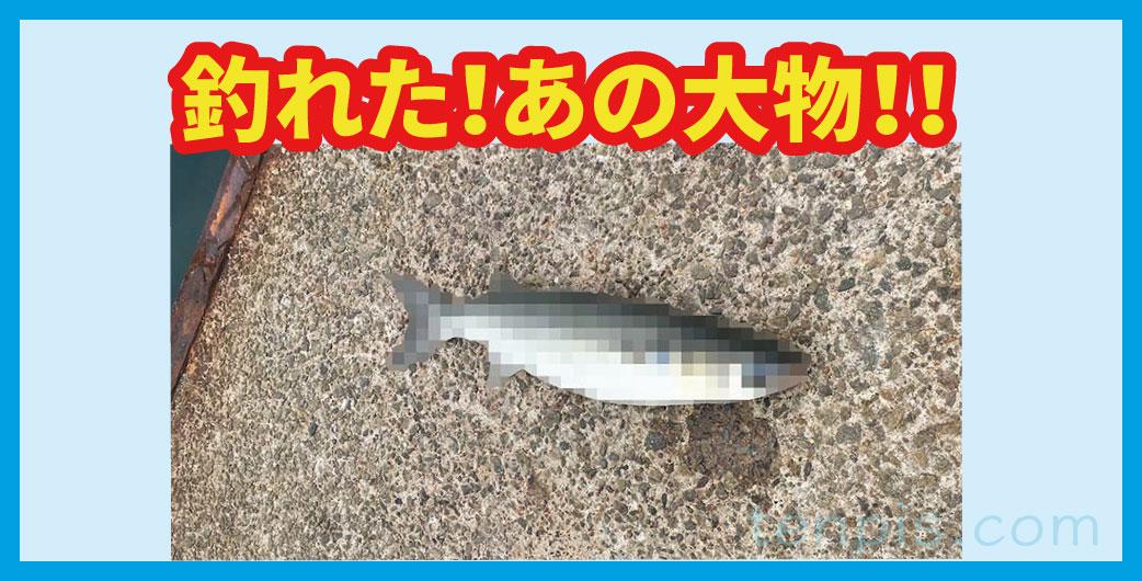 大物釣り画像