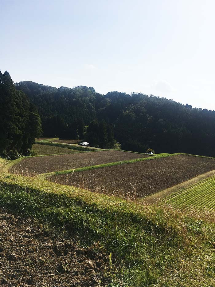 神子原の棚田